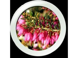 Вересковые растения